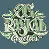 OG Raskal Seeds