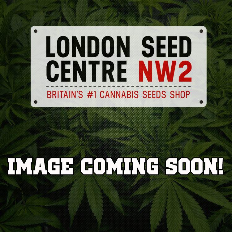 Fire Alien Kush Cannabis Seeds