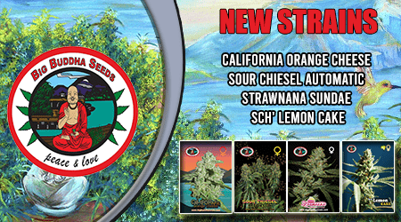 Big Buddha Cannabis Seeds New