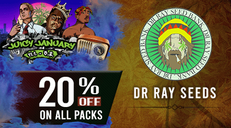 Dr Ray Cannabis Seeds Discount