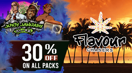 Flavour Chasers Cannabis Seeds Discount