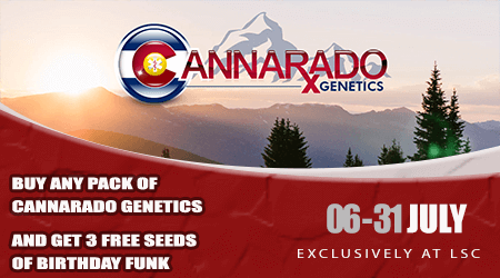 Cannarado Seeds Special Offer