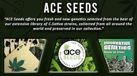 Cannabis Seeds Breeder - Ace Seeds