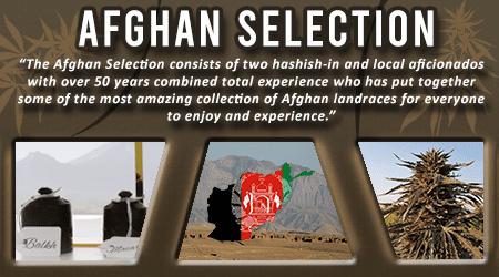Cannabis Seeds Breeder - Afghan Selection