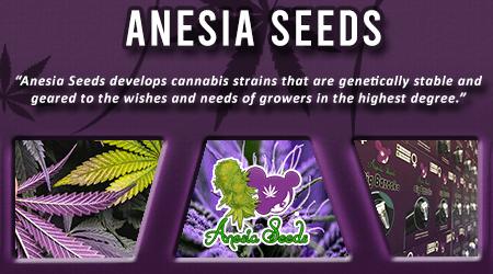 Cannabis Seeds Breeder - Anesia Seeds