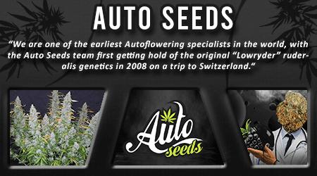 Cannabis Seeds Breeder - Auto Seeds