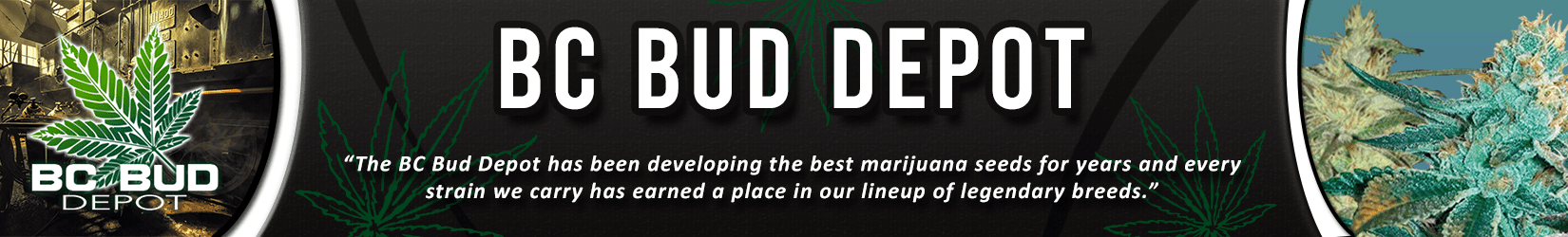 Cannabis Seeds Breeder - BC Bud Depot