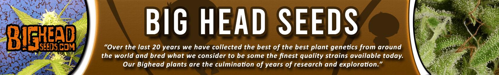 Cannabis Seeds Breeder - Big Head Seeds