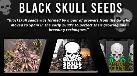 Cannabis Seeds Breeder - Black Skull