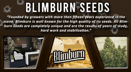 Cannabis Seeds Breeder - Blim Burn Seeds