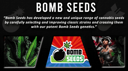 Cannabis Seeds Breeder - Bomb Seeds