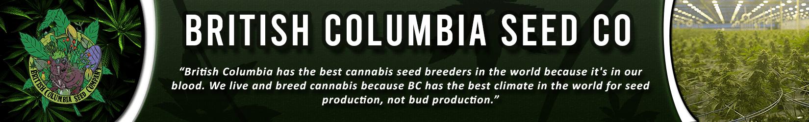 Cannabis Seeds Breeder - British Columbia