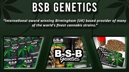 Cannabis Seeds Breeder - BSB Genetics