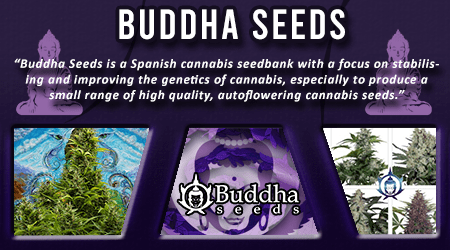 Cannabis Seeds Breeder - Buddha Seeds