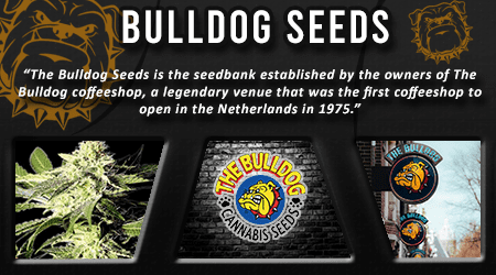 Cannabis Seeds Breeder - Bulldog Seeds