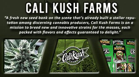 Cannabis Seeds Breeder - Cali Kush Farms