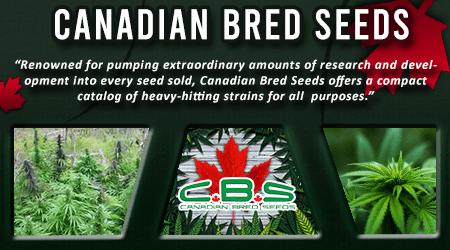 Cannabis Seeds Breeder - Canadian Bred Seeds