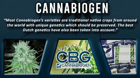 Cannabis Seeds Breeder - Canna Biogen Seeds