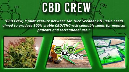 Cannabis Seeds Breeder - CBD Crew