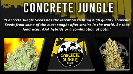 Cannabis Seeds Breeder -Concrete Jungle