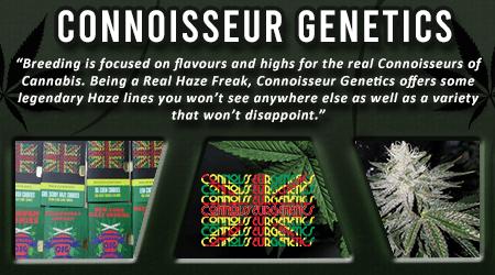 Cannabis Seeds Breeder - Connoisseur Genetics