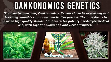 Cannabis Seeds Breeder - Dankonomics