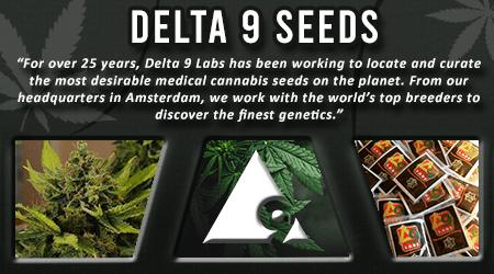 Cannabis Seeds Breeder - Delta 9 Lab Seeds