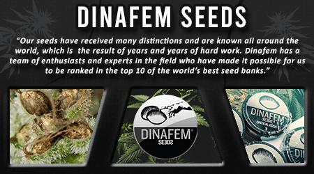 Cannabis Seeds Breeder - Dinafem Seeds