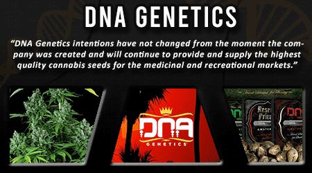 Cannabis Seeds Breeder - DNA Genetics