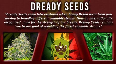 Cannabis Seeds Breeder - Dready Seeds