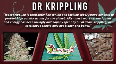 Cannabis Seeds Breeder - Dr Krippling