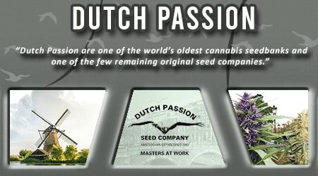 Cannabis Seeds Breeder - Dutch Passion Seeds