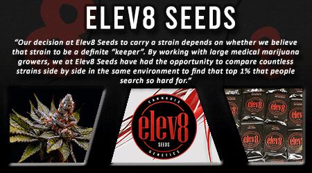 Cannabis Seeds Breeder - Elev8 Seeds
