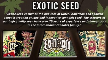 Cannabis Seeds Breeder - Exotic Seed