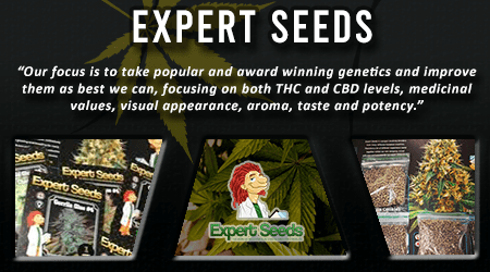 Cannabis Seeds Breeder - Expert Seeds
