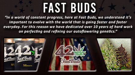 Cannabis Seeds Breeder - Fast Buds