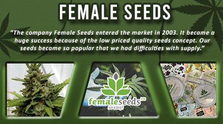 Cannabis Seeds Breeder - Female Seeds
