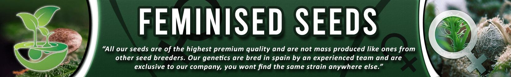 Cannabis Seeds Breeder - Feminized Seeds