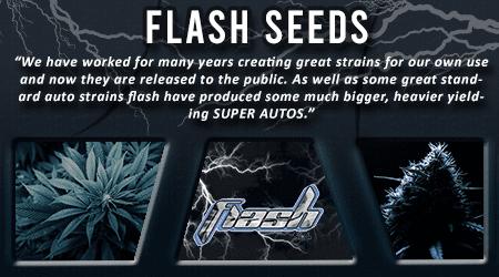 Cannabis Seeds Breeder - Flash Seeds