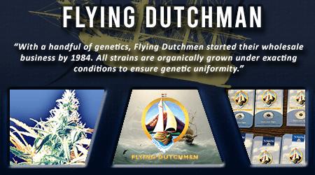 Cannabis Seeds Breeder - Flying Dutchman