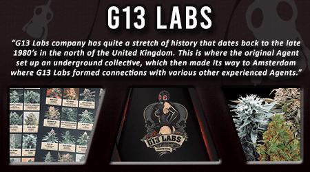 Cannabis Seeds Breeder - G13 Labs