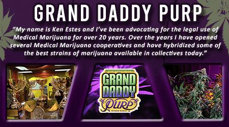Cannabis Seeds Breeder - Grand Daddy Purp