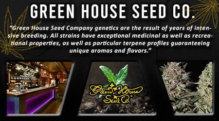 Cannabis Seeds Breeder - Greenhouse Seeds