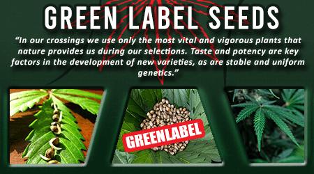 Cannabis Seeds Breeder - Green Label Seeds