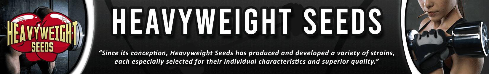 Cannabis Seeds Breeder - Heavyweight Seeds