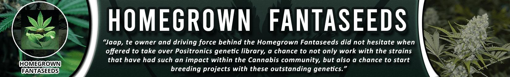 Cannabis Seeds Breeder - Homegrown Fantaseeds