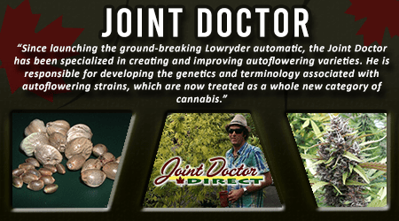 Cannabis Seeds Breeder - Joint Doctor Seeds