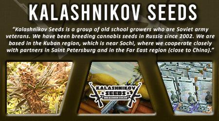 Cannabis Seeds Breeder - Kalashnikov Seeds