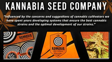 Cannabis Seeds Breeder - Kannabia Seed Company