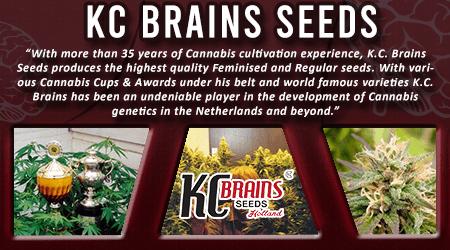 Cannabis Seeds Breeder - KC Brains